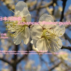 もう春が?!Is spring already? !!