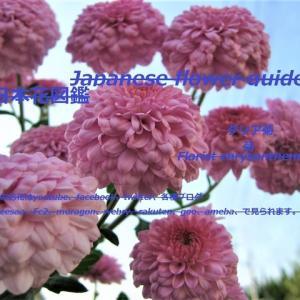 青空にピンクのアドバルーン?!A pink ad balloon in the blue sky? !!