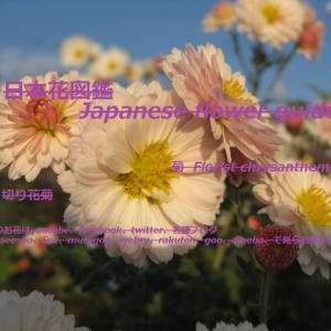 青空に白い笑顔?!A white smile in the blue sky? !!