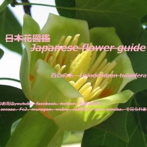 十五メートルツリーのランプ?!What about the 15-meter tree lamp? !!