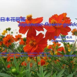 赤・黄・橙?!Red / yellow / orange? !!