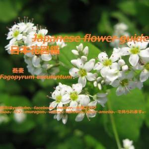 草原は?!What about the meadow? !!