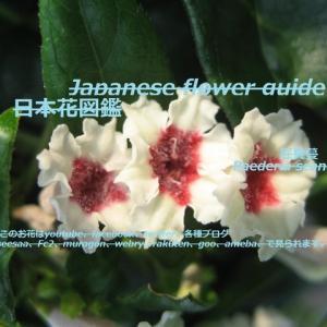 奇麗だけと臭い?!It's beautiful but it smells ?!!