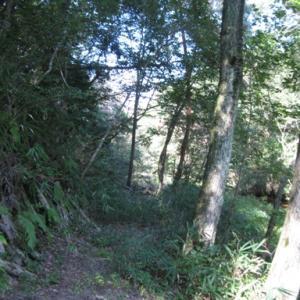夢の里の森を歩く