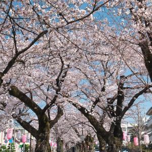南信州の桜(その1)