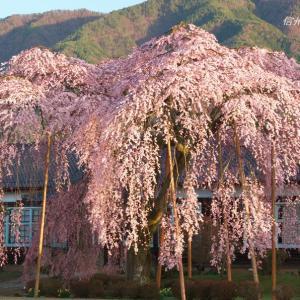 南信州の桜(その6)