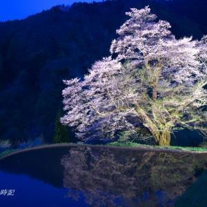 南信州の桜(その8)