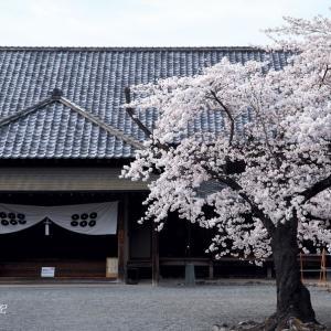 松代の桜(その1)