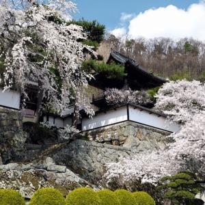 大雲寺の桜景色