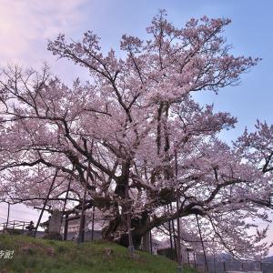 長野地方の一本桜(その1)