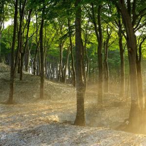 関田峠のブナ林