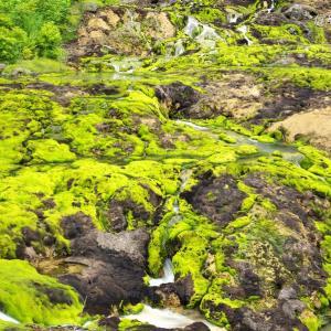 珍しい苔の世界