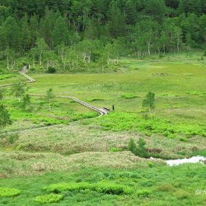 花と緑の志賀高原