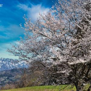 春爛漫の小川村