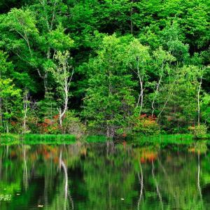 深緑の水辺