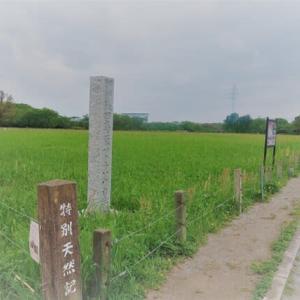 さくら草公園-田子山富士塚 散策