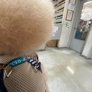 病院〜お買い物〜酒処⭐️香麻呂