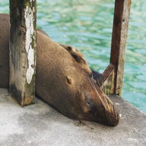ガラパゴス諸島に行くには?世界自然遺産のガラパゴス島へ個人旅行!