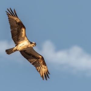 能ある鷹は爪を隠すって英語で何ていうの?