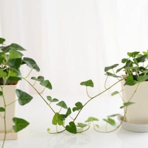 空気清浄やリラックス効果も! 観葉植物があると良い理由とおすすめ5選