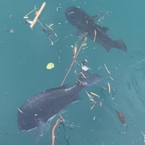 釣りの便利グッズ紹介!魚を活かしてキープする方法まとめ