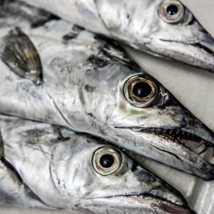 岸から人気の夜釣りターゲット・タチウオを狙おう!釣り方・タックル解説