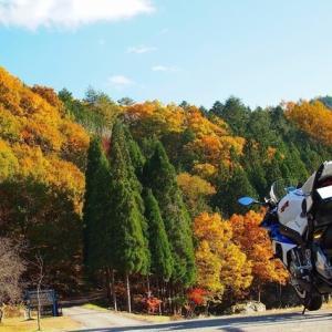 【岐阜県】紅葉真っ盛りの「せせらぎ街道」へソロツーリングに行ってきました。鶏ちゃんも!