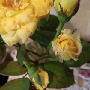 希少価値のある花たち