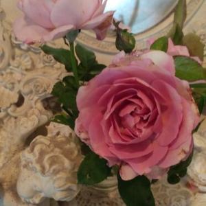 薔薇の魅力