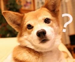 タイ語で「なぜ」「どうして」「なぜならば~だから」の言い方は?