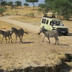 【アフリカの国紹介】タンザニアその2 おススメ観光~サファリツアー~