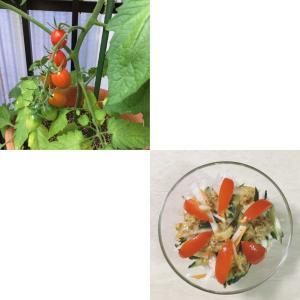 初収穫でミニミニサラダ