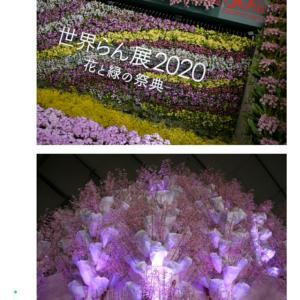 ・「世界らん展2020-花と緑の祭典-」2020年の日本一のらん・