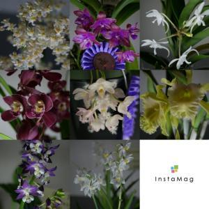 ・「世界らん展2020-花と緑の祭典-」香りを楽しむ・