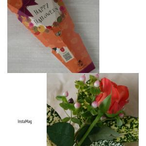 ・Flower Halloween♥お花の定期便「Bloomee LIFE」・
