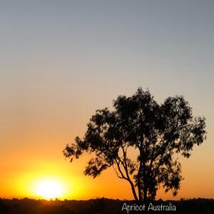夕陽色に染まるサンセット