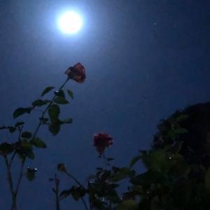 満月の翌晩の薔薇と月
