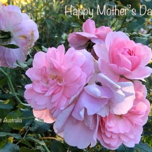 Happy Mother's Day ロックダウン48日目