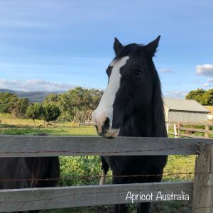 Black Horse 〜Yarra Valley 〜Videos and photo...