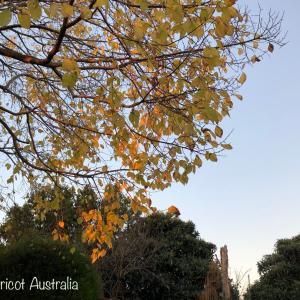 紅葉の葉が風に舞い枯葉のカーペット