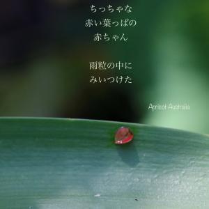 雨粒の中に赤い葉っぱの赤ちゃん