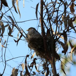 野鳥の子育てシーズン/ロックダウン