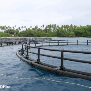 マジュロ環礁の洋上ケージ養殖システム補修作業