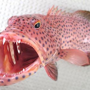 魚のエラと内臓を一発でキレイに取り除く方法【全ての魚に対応】