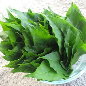 唐辛子の葉の食べ方【辛い実だけではない美味しい唐辛子の葉】