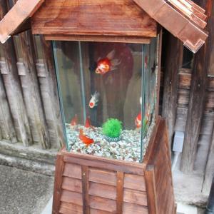 大和郡山で金魚を販売している専門店の紹介