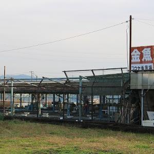 大和郡山の金魚店「コウヤ養魚場」を紹介!【画像あり】