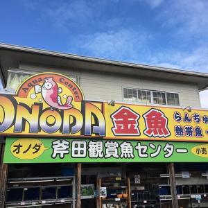 大和郡山の金魚店「斧田観賞魚センター」を紹介!【画像あり】