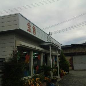 大和郡山市の金魚店「金魚ランド幸田」をご紹介!【画像あり】