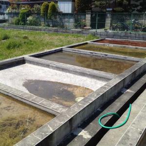 金魚の産卵床とは?天然、人工、産卵床はどちらが良い?【徹底比較】